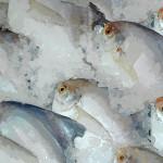 peixes-congelados